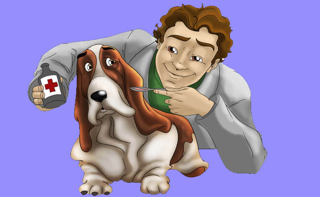 pet care busy schedule