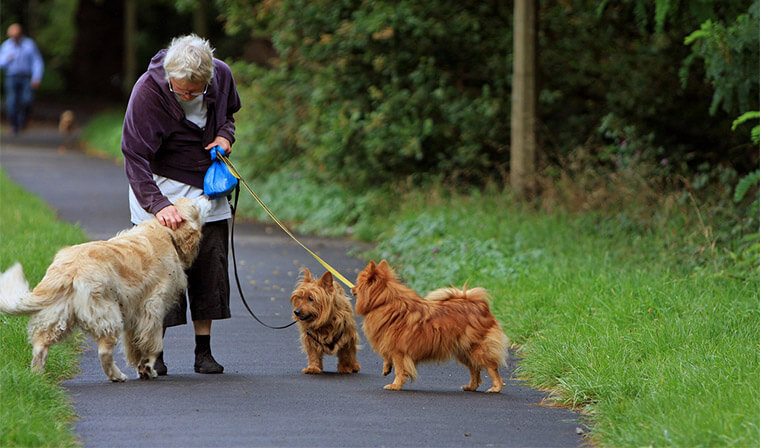 Pets Great for Seniors