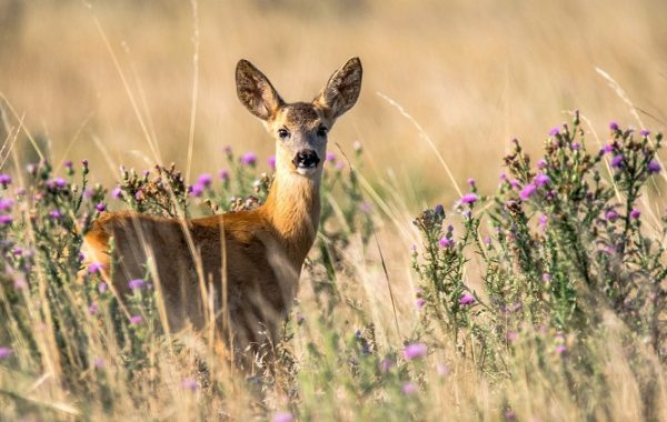 How To Support Wildlife At Home